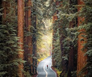 california, forest, and nature image