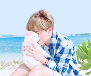 jimin, bts, and cat image