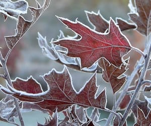 autumn, leaves, and frost image