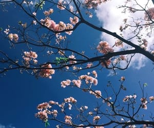 flowers, clouds, and sky image
