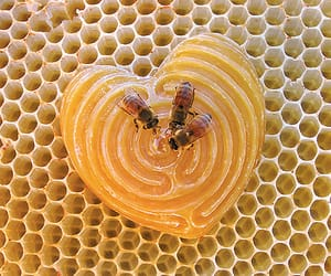 bee, honey, and theme image