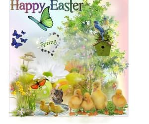 cat, ducks, and spring image