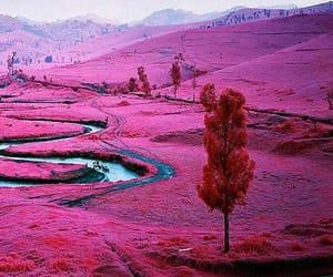 pink, nature, and landscape image
