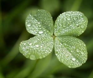 clover, nature, and green image