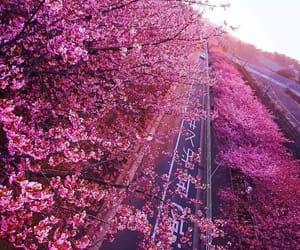 cherry blossom, exteriores, and primavera image