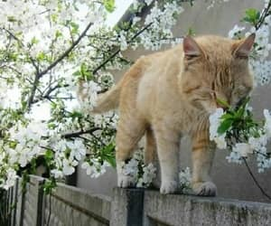 animal, cat, and blossom image