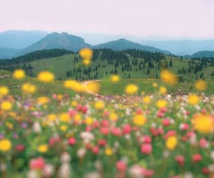 field, flowers, and valley image