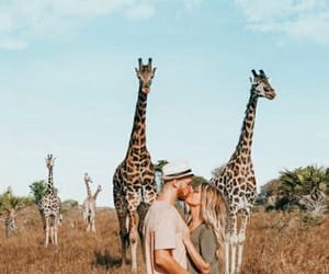 africa, jirafa, and life image