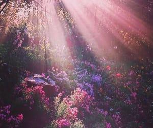 nature and sunbeam image