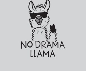 funny, quotes, and drama image