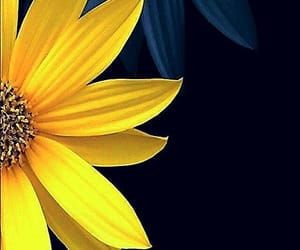 daisy, floral, and flowers image