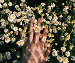 flowers, green, and hand image