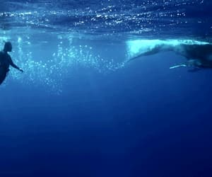 whale and gif image