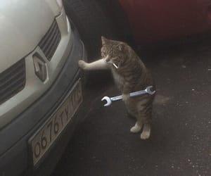 meme and cat image