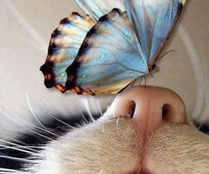 butterfly and cat image