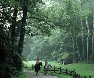 forest, horse, and nature image