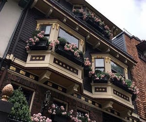 flowers, building, and house image
