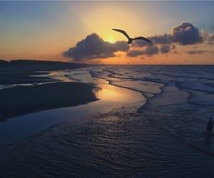 beach, bird, and mother nature image