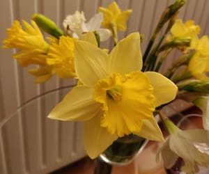 flowers, narcissus, and yellow image