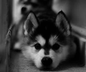 adorable, dog, and animal image
