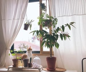 cat, plants, and room image
