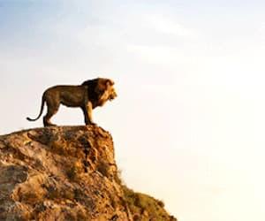 disney, the lion king, and gif image