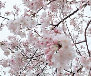 flowers, japan, and outdoor image