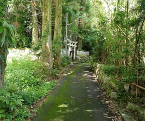 green, japan, and moss image