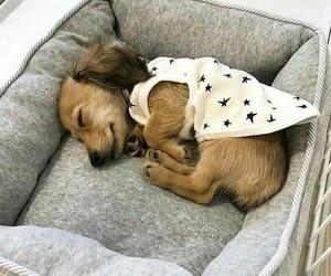 animals, puppy, and dog image