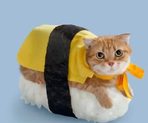 cat, sushi, and yellow image