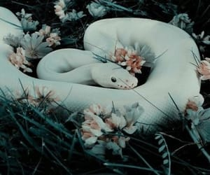 aesthetic, fantasy, and flowers image