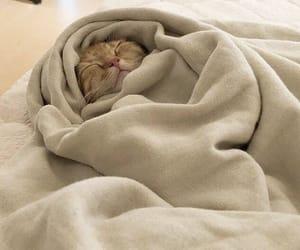cat, cute, and beige image
