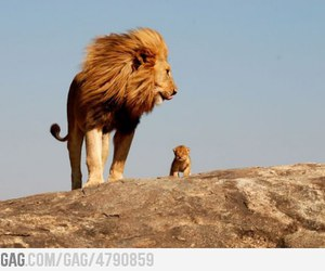 9gag and cute image
