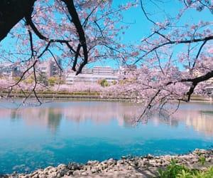 beautiful, japan, and 桜 image