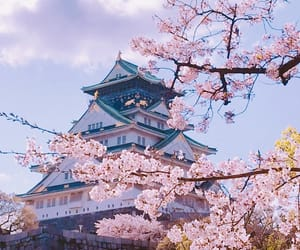 beautiful, castle, and blossom image