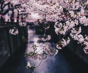 beautiful, japan, and photography image