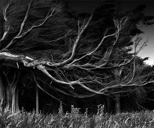 tree, black & white, and black and white image