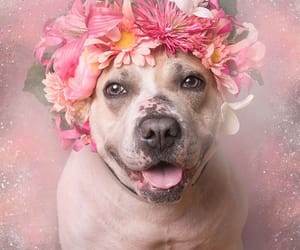 dog, flowers, and pink image