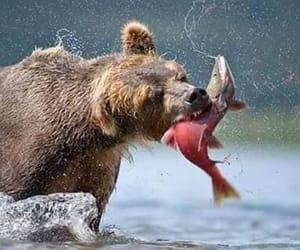 bear, fish, and nature image
