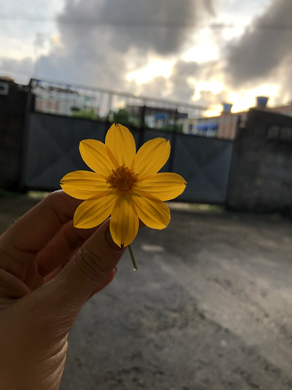 flowers, inspiration, and morning image
