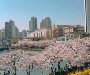 flowers, korea, and spring image