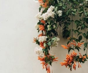 flowers, orange, and white image