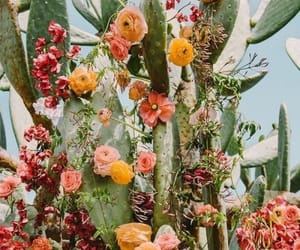 flowers, cactus, and aesthetic image
