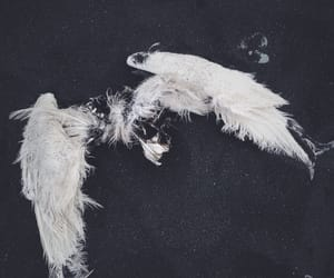 wings, aesthetic, and angel image