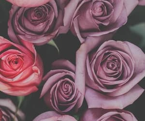 beauty, flowers, and rose image