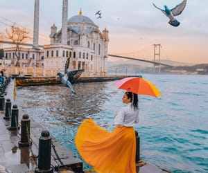 birds, inspo, and istanbul image