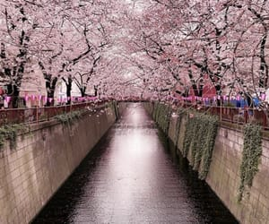 pink, spring, and travel image