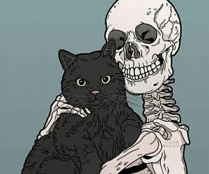 skeleton and cat image