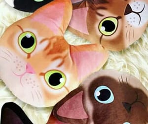cats, Gatos, and wallpapers image