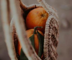 fruit, nature, and orange image
